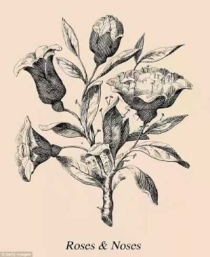 Can You Find The Six Faces Hidden In This Bunch Of Roses ?